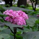 名前のわからない花:2015.7.18