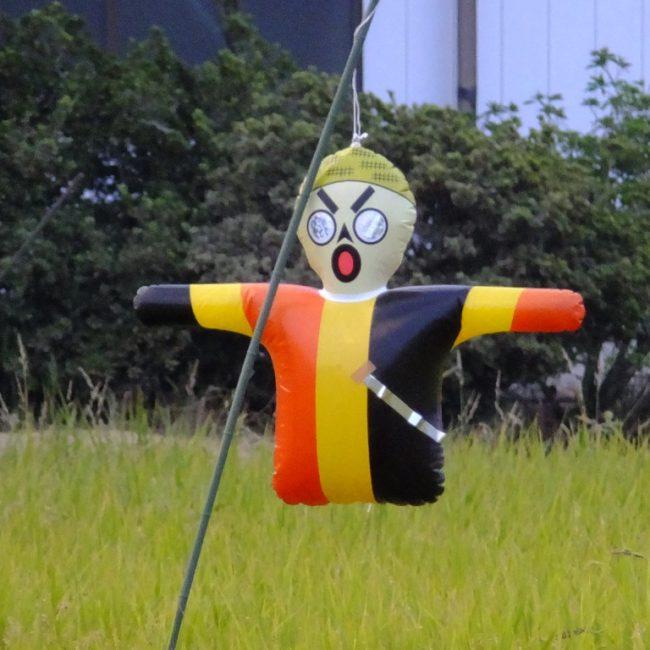 稲刈り前の田んぼ 2015.9.5