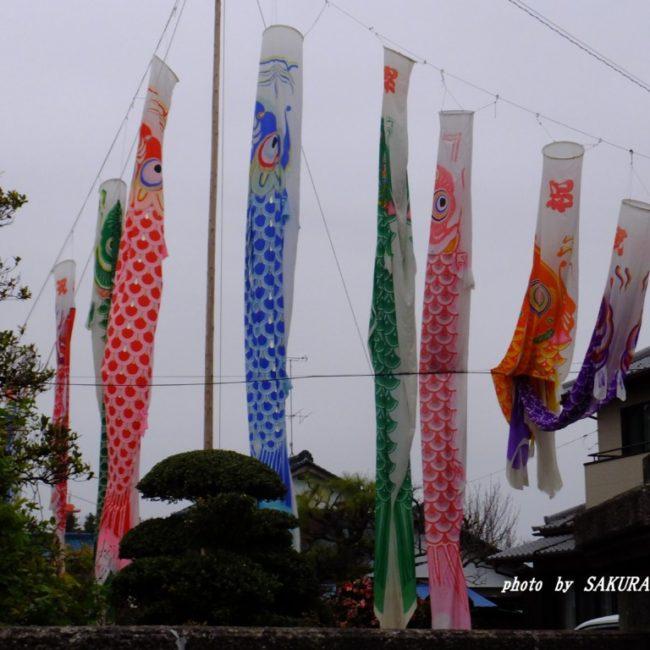 鯉のぼり  2015.4.5