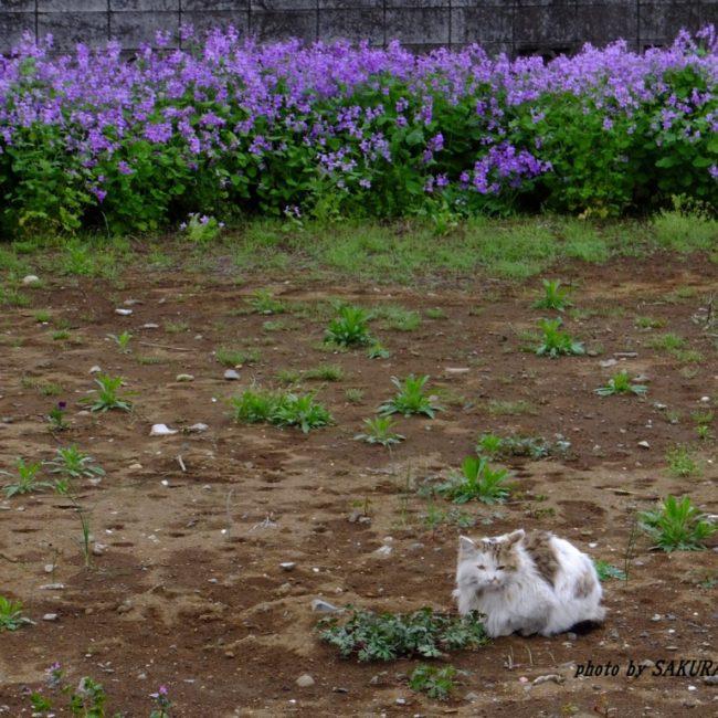 ネコとショカッサイ 2015.4.24