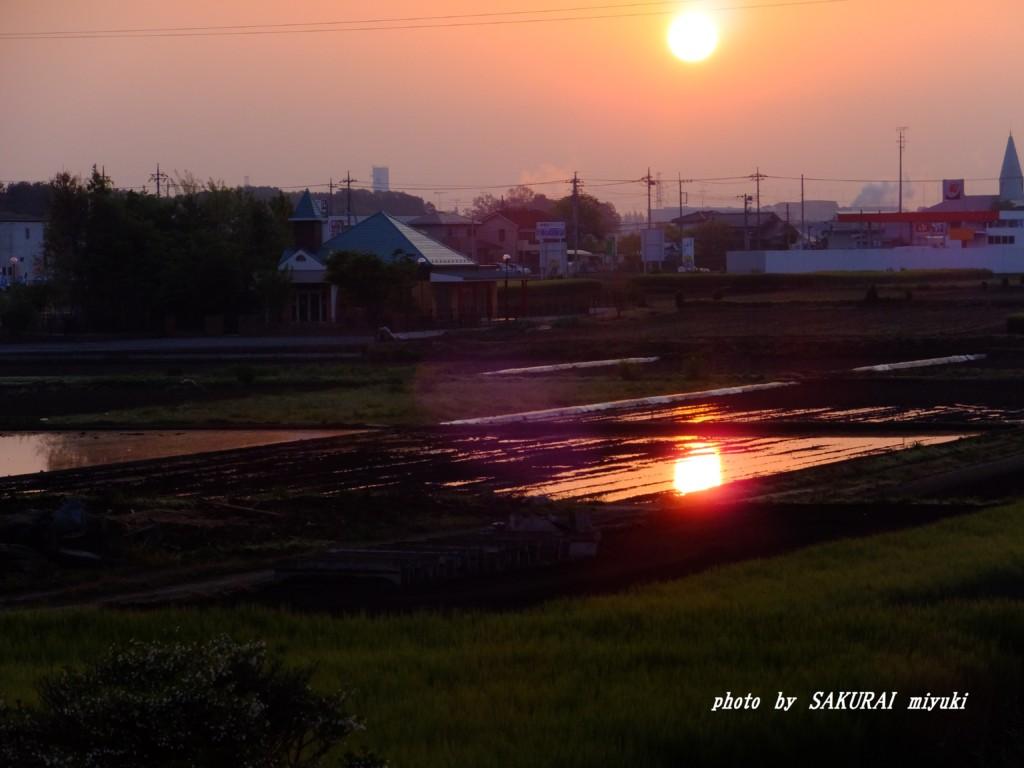 田ごとの太陽  2015.4.27