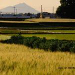 今朝の筑波山  2015.5.11 栃木県小山市