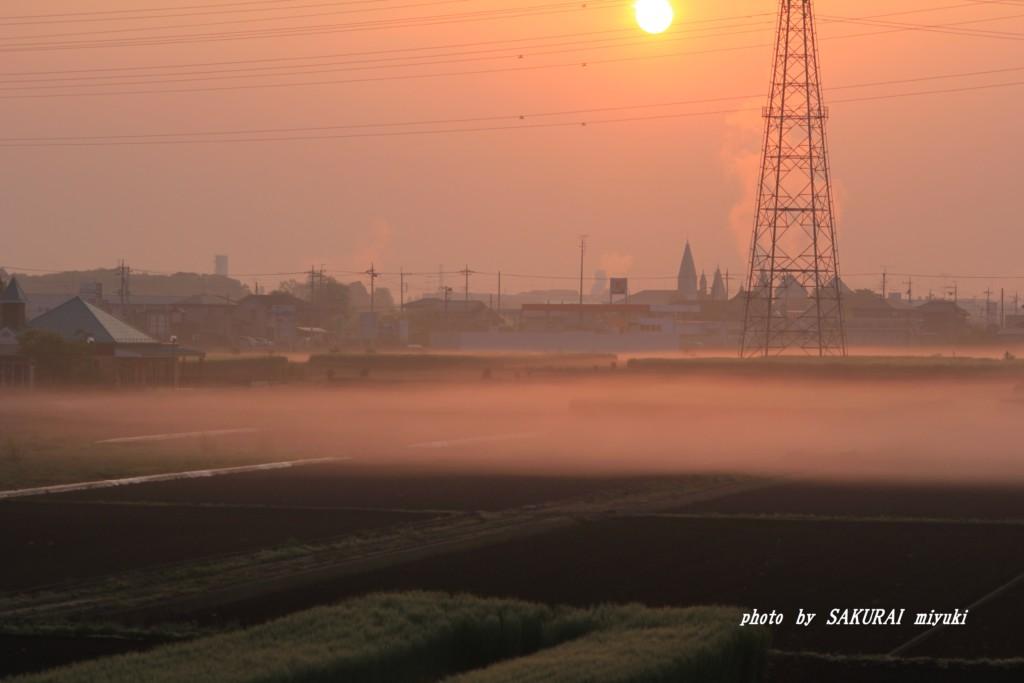 霧の農地  2015.4.25