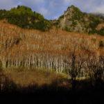 志賀高原の坊寺山と旭山に登ってきました。2016.11.3(木、祝)。 その2