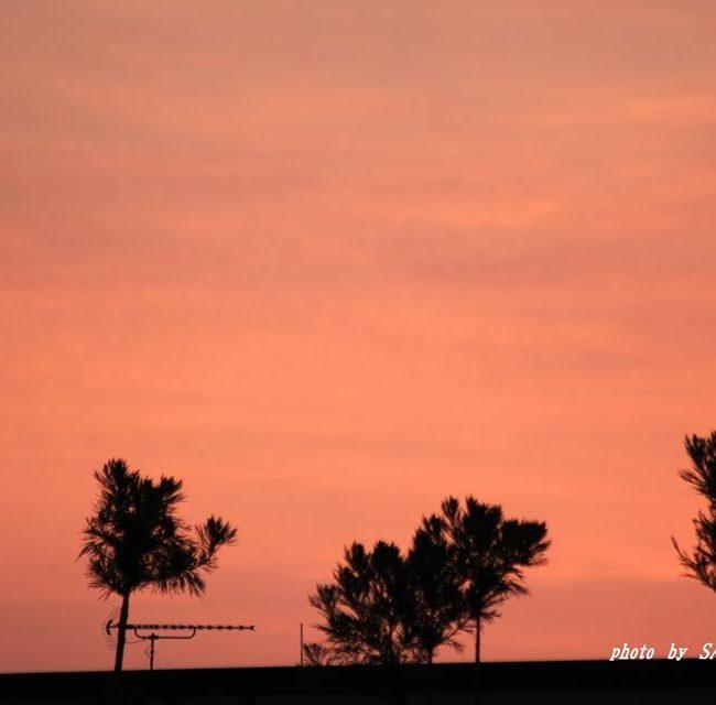 ボルネオの朝  2015.3.29