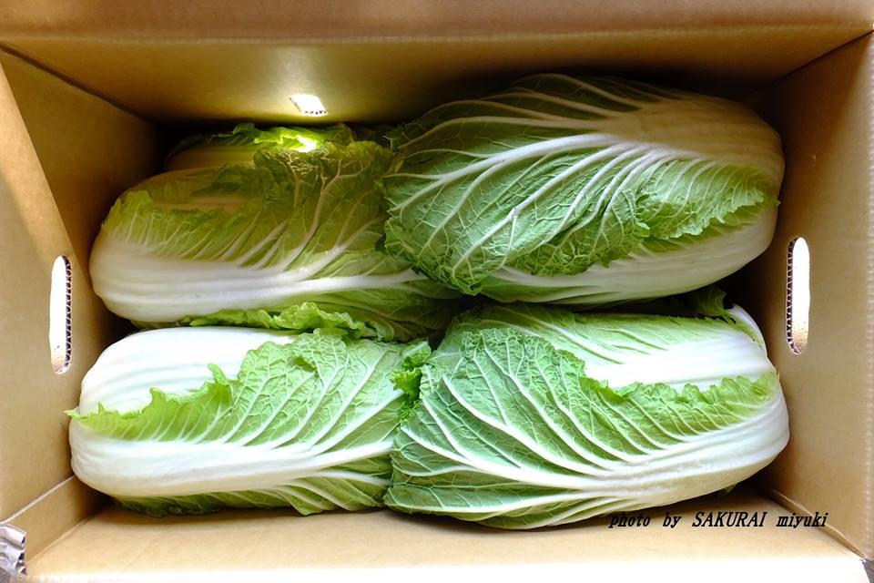 箱入り白菜 2015.2.27