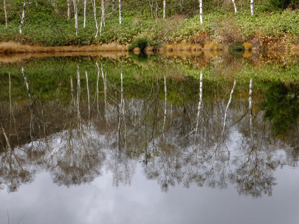 上の小池 標高1570m
