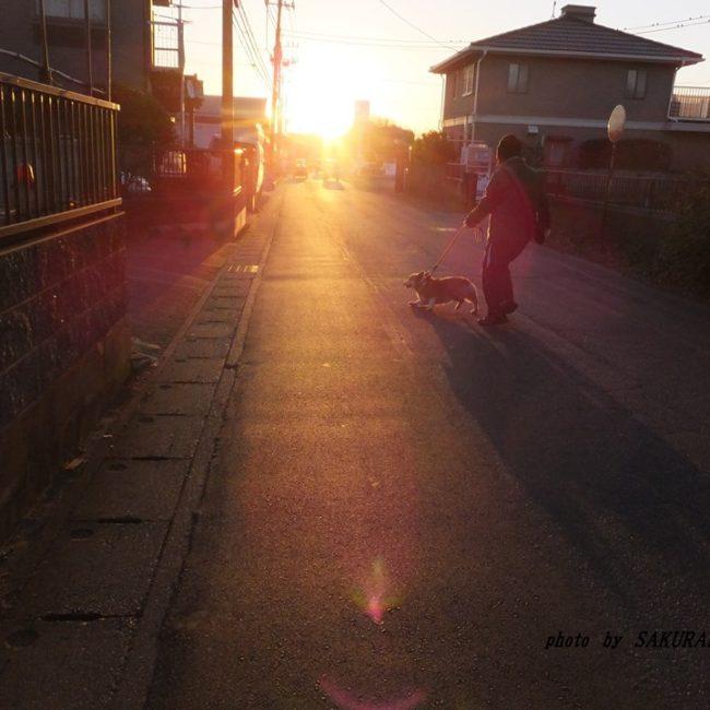 陽のあたる道 2015.1.14