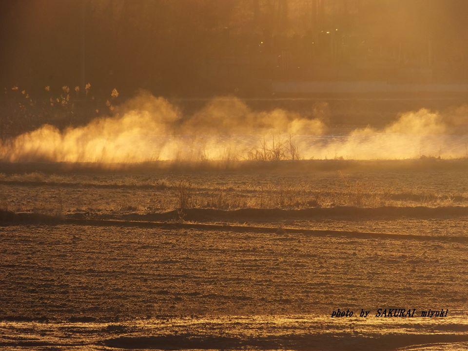 オレンジの川霧 2015.1.24