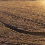 霜がおりた正しい冬の畑 2014.12.9 栃木県小山市