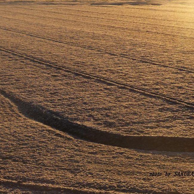 霜の降りた畑 2014.12.9