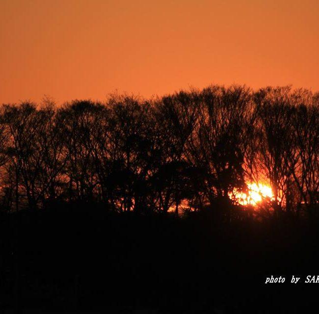 森か昇る朝日 2014.12.27