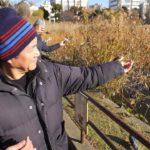 上野公園不忍池の手乗りスズメ 2014.12.27