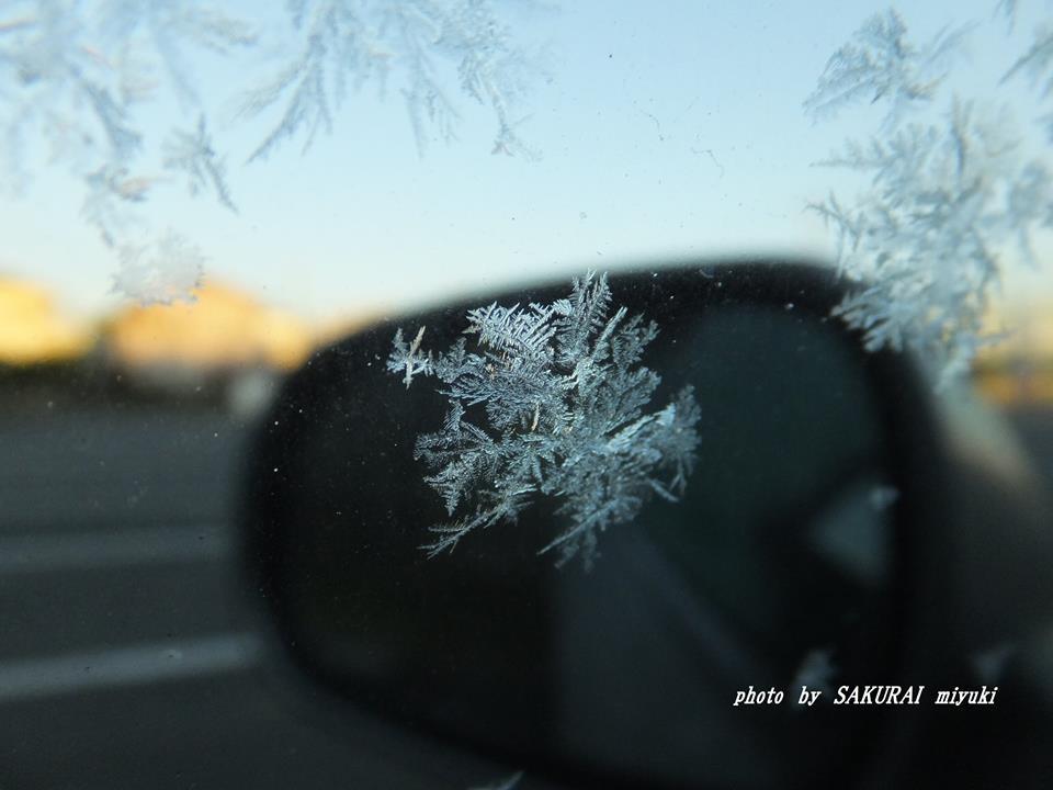 クルマの窓の霜 2014.1.2.29