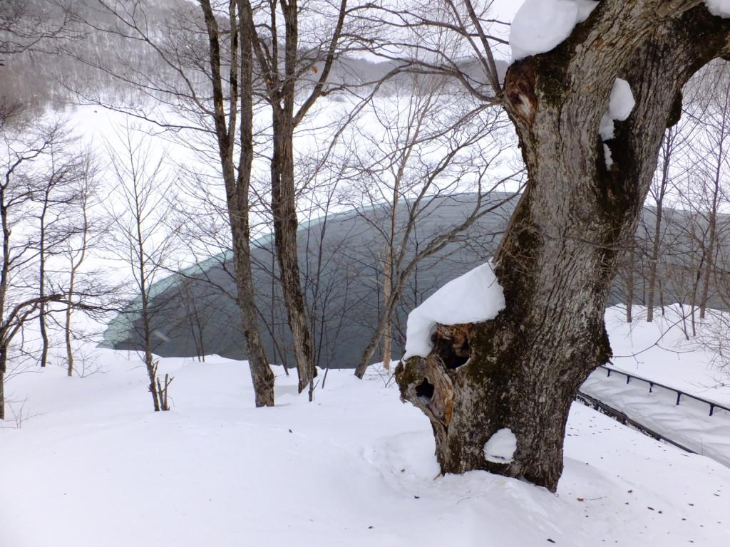 凍らない琵琶池