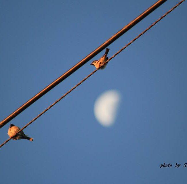 月にスズメ 2014.11.14