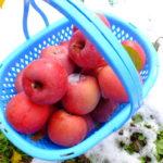 信州のおいしいりんご通販はじめます 長野県山ノ内町産サンふじりんご