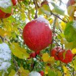 【 りんごでダイエット 実録 1ヶ月で6キロやせた 】