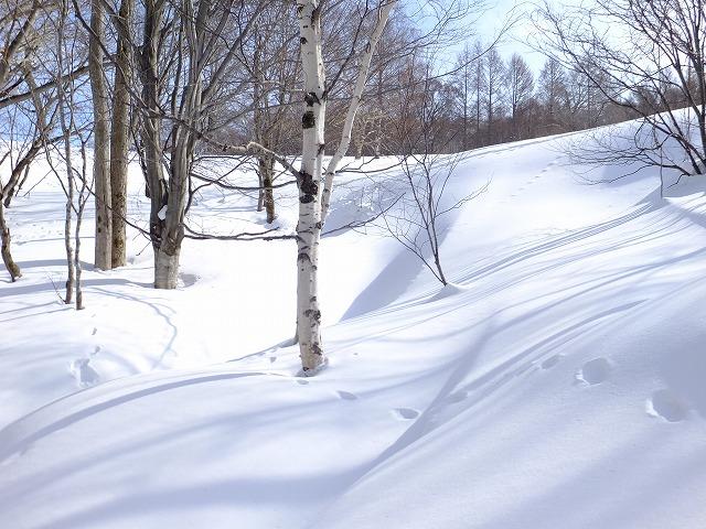 雪野原にあたる日差し
