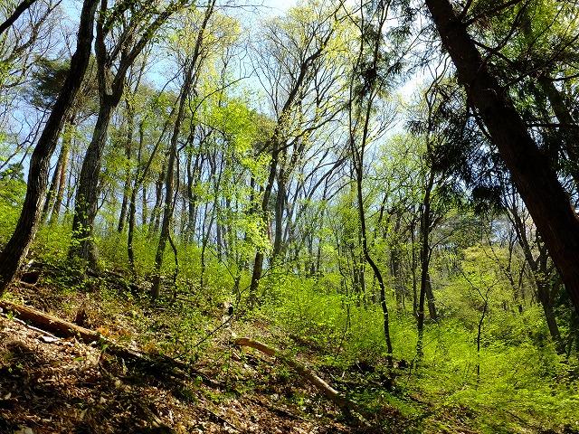 オオルリのいる森