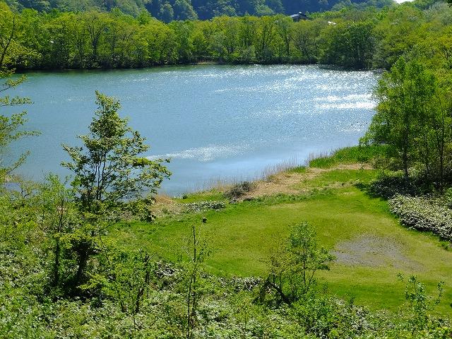 丸池とサル