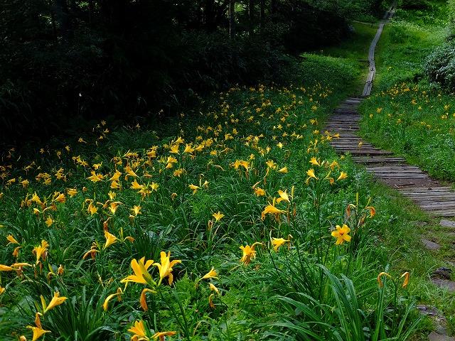 寺子屋山への道