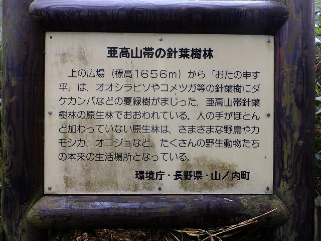 亜高山帯針葉樹林説明