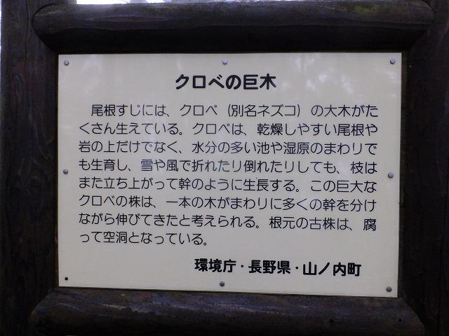 クロベの巨木説明板