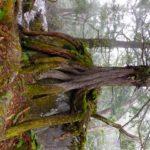 志賀高原トレッキング まが玉の丘コースと池めぐりコース途中まで 2017.6.1(木)