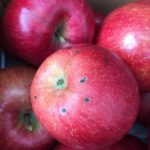 農薬嫌いのブログ記事に反論してみる 農薬会社30年の経験から