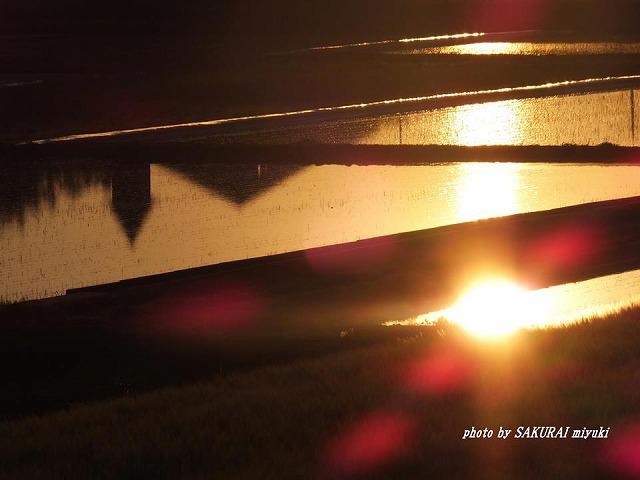 田毎の太陽