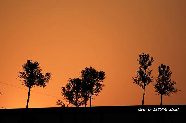 南の島の夜明け