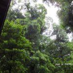 今朝の散歩中に出会った風景:宮の空 2014.6.6 栃木県小山市