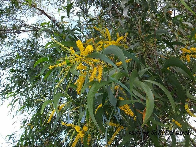 名前のわからない黄色い花