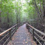 ボルネオ島で出会った風景:緑の回廊 マングローブ林 2014.4.17