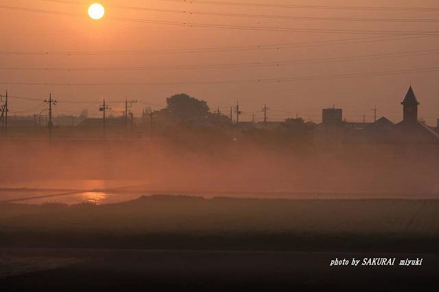 田んぼの霧と太陽