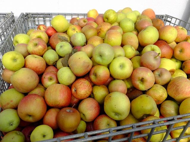 病気などで捨てられたりんご