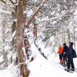 志賀高原スノーシューハイキング長池コース行ってきた 2020.2.2