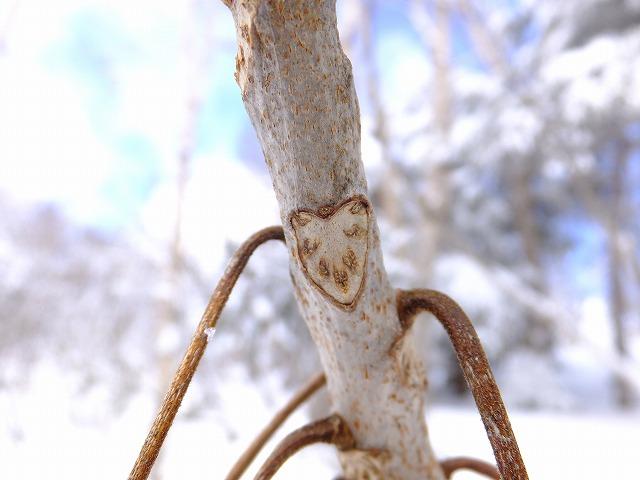 冬の植物観察