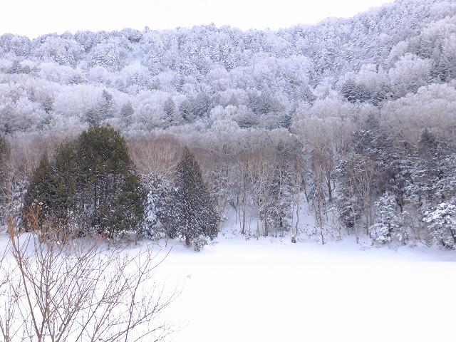 雪で埋まった長池と原生林