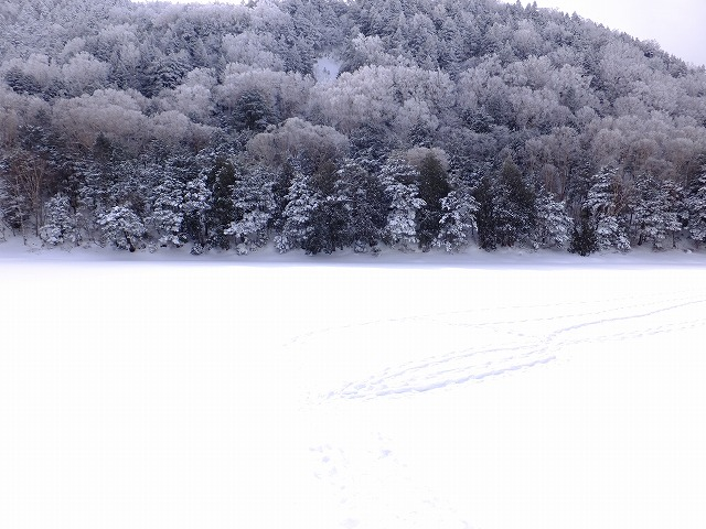 雪で埋まった長池