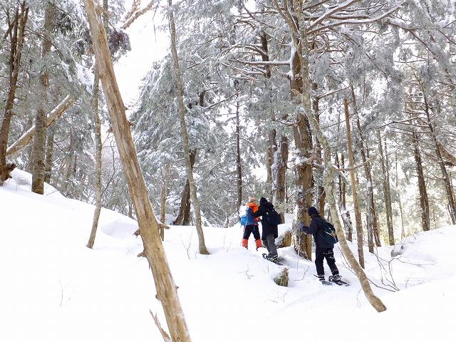 針葉樹の原生林を登る