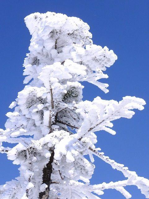 通称エビのしっぽ 雪と強風で風下にできる 2020.2.24