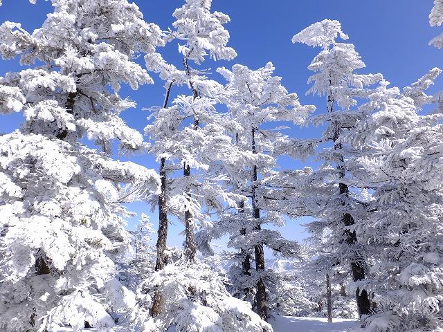 樹氷の間を歩く 2020.2.24