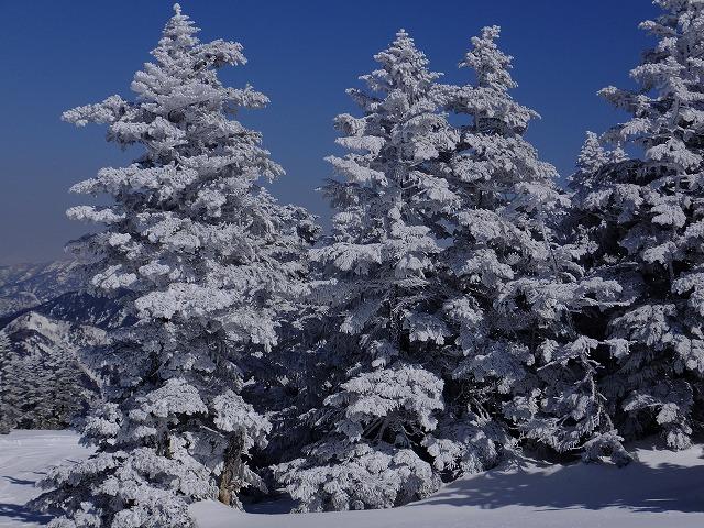 典型的な樹氷 2020.2.24