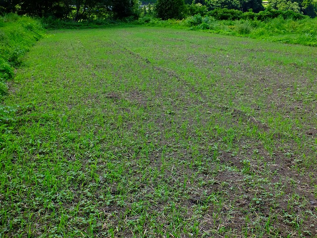 春先、小麦畑だった場所