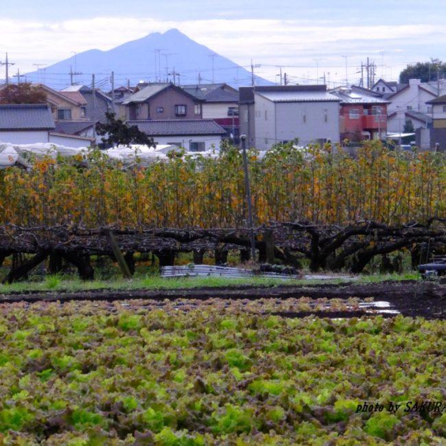筑波山 2015.11.11