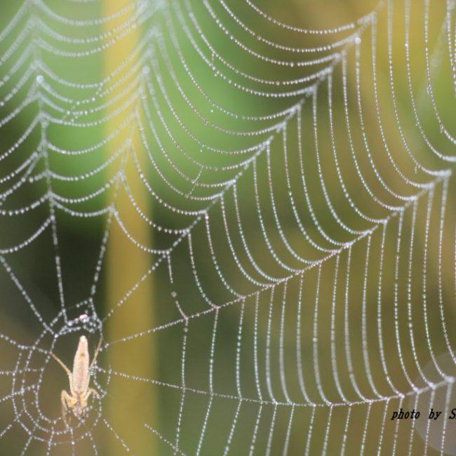 クモの巣 2015.11.6