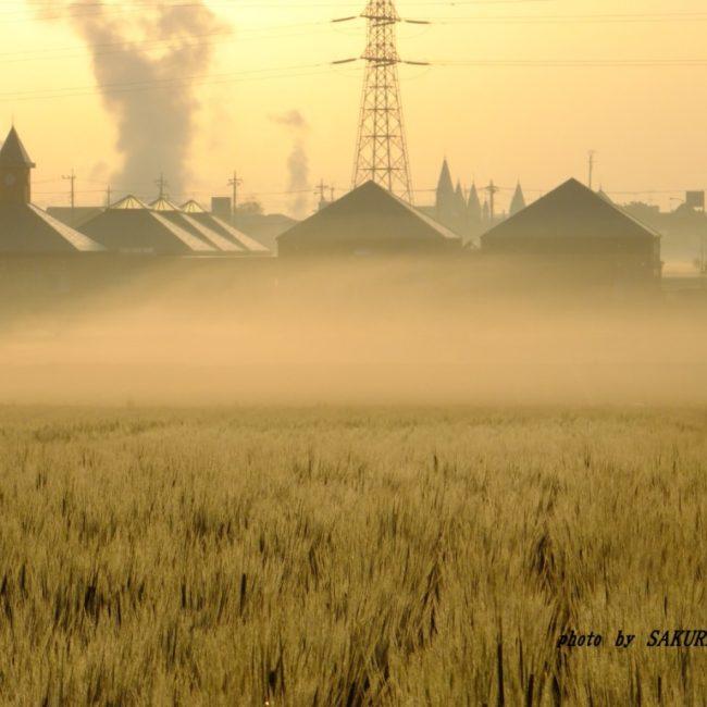 霧のたまる農地  2015.4.18