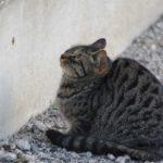 逃げる気配のない猫背のネコ 2015.1.14 栃木県小山市